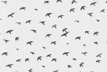 birds birds birds / by bastisRIKE