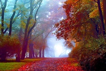 Autumn / My favorite time of the year! / by Mary Detmer