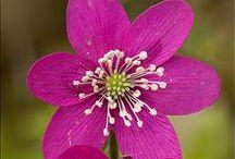 Fleurs ♥ Flowers / by Laurence Chaumuzeau