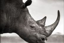 Animals, Animals / by Robin Humbard