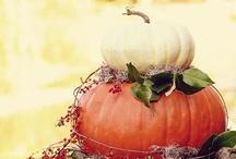 Fall / by Amy Regan