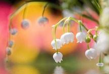 Flowers and Gardens / by Rachel Buckner