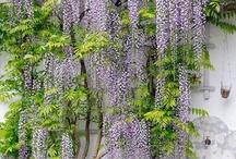 hort i plantes / by forisabelitv Itv