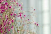 pretty / by Katelyn Miller