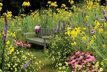 gardening ideas / by Sandy Brewster