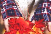 fall / by Katelyn Miller