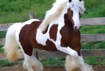 Horses / by Drew Courtney