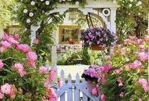 Beautiful Gardens and Planter Ideas / by Michele Knoppel