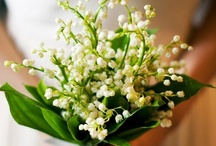 Bridal Bouquets - White and Cream / Gorgeous bridal bouquets / by Bergerons Flowers