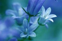 ○○  Beautiful plant / 草花には詳しくありません。でも地球随一美を授かった生命なんですね。 / by Isao Wakasugi