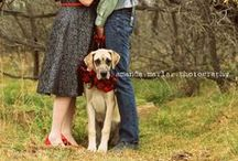 Photography - Pets / by Pam Tobias