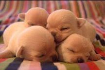 Puppy Love.  / by John N Pam Straziuso