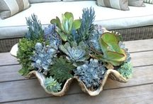 Succulent Arrangements / by Jodie Wong