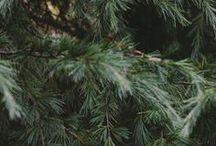 Christmas! / by Elizabeth Fischer