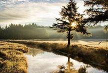Landscape / by Peter Brophy
