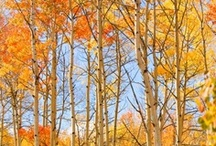 Fall in Aspen / As the summer winds down in Aspen, there is much to look forward to this fall as the leaves become brilliantly golden and cool weather sets in. With a colorful cultural calendar and outdoor activities in abundance, there is nothing like Aspen in the fall. / by Aspen Colorado