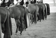 equestrian life <3  / by Victoria Wischnesky