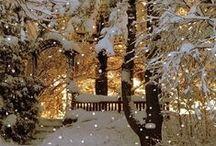 Winter / by Andrea Morse