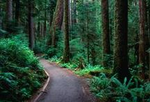 Pacific Northwest / by Andrea Morse