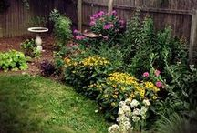 KY Native Plants / by Retta Ritchie-Holbrook