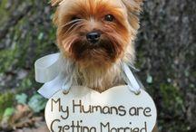 Dream Wedding / Things I like!!! / by Pamela Horton Arzola
