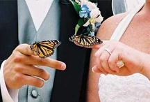 ♥ Butterfly Weddings | Theme Weddings | Jevel Wedding Planning ♥ / Wedding Themes | Butterflies | Jevel Wedding Planning   |  If you have been invited to pin on this board please read the  board rules on our Community Board.   / by ♥ Jevel Wedding Planning | Jennifer E Wilson ♥