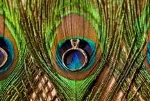 ♥ Peacocks Weddings | Theme Weddings | Jevel Wedding Planning ♥ / Wedding Themes | Peacocks | Jevel Wedding Planning / by ♥ Jevel Wedding Planning | Jennifer E Wilson ♥