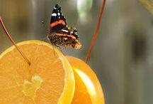 Butterfly Garden / by Renee Reed