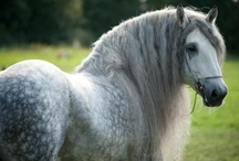 Horses-My Favorite Creatures #1 / by Teri Hankins