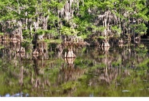 My Photos of Caddo Lake / I just love, love, love this place. I can go there again and again and never get tired of it. / by Teri Hankins