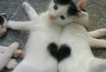 Animal Love / by MyInnerPrincess