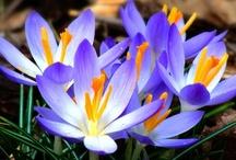 flowers / by Mom's Cherub