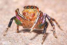 Charming Arachnids / by Christine
