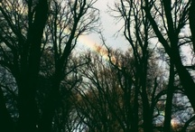 Rainbows / by Christine