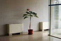 One Plant / Lone plants. / by Christine