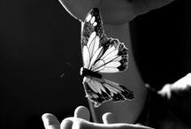 Butterflies / by Kelly Anne