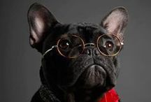 French Bulldogs & dog stuff / by Katie / Kitschy Hippo