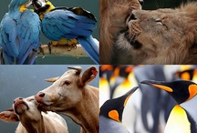 ~Animals, Birds and Other Creatures~ / Animals / by Diane Harris-Day