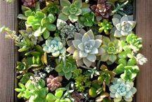 outdoor and indoor garden / by Katie / Kitschy Hippo