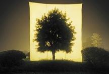 trees / by Festina Lente