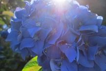 Blue / by Taryn Wilson