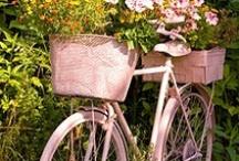 bicycles / by Robbyn Storey