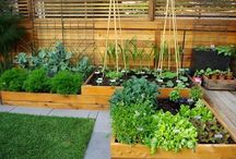 Gardening and Landscape / by Kristin Sanders
