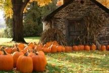 Autumn & Halloween / by Amy Weismann