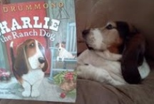 Bassets...and other pets / by Janet Hensen