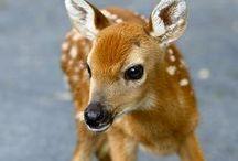 Animals / by Nancy Melton