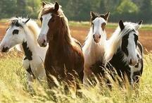 Horses / by Cyndy Thomas