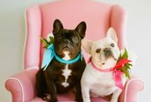 POOCH-A-NISTA / FASHIONABLE DOGS / by MISS MILLIONAIRESS