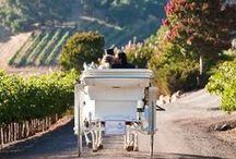 HAUTE IN NAPA VALLEY /  LIFESTYLE IN  NAPA VALLEY / by MISS MILLIONAIRESS