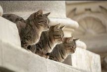Domestic cutie cats / by stichting SPOTS